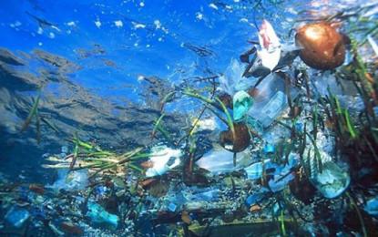 Campanha internacional recolhe lixo aquático em sete ilhas do arquipélago dos Açores