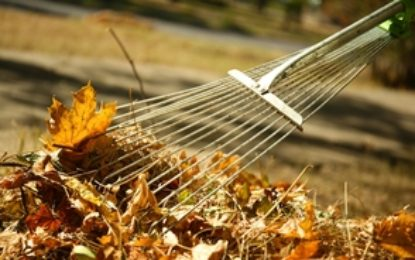 Essex County leaf collection schedule for county roads